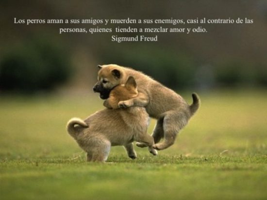 Animales con Frases  (11)
