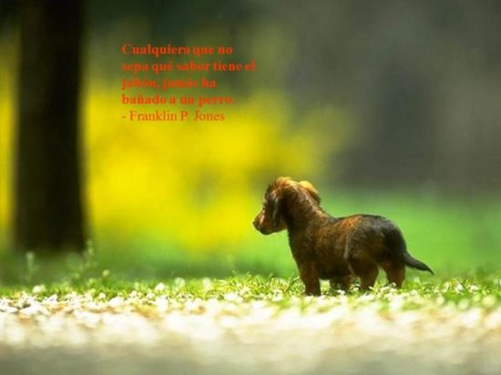 Animales con Frases  (12)