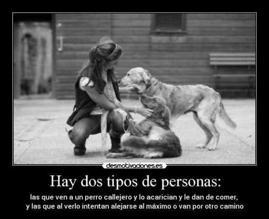 Animales con Frases  (15)