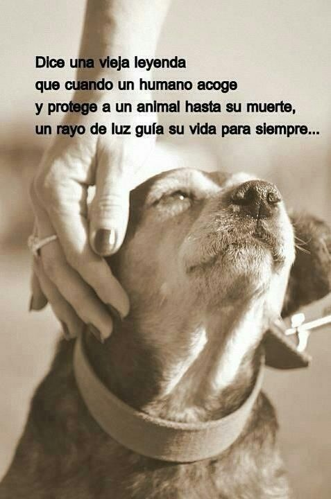 Animales con Frases  (16)