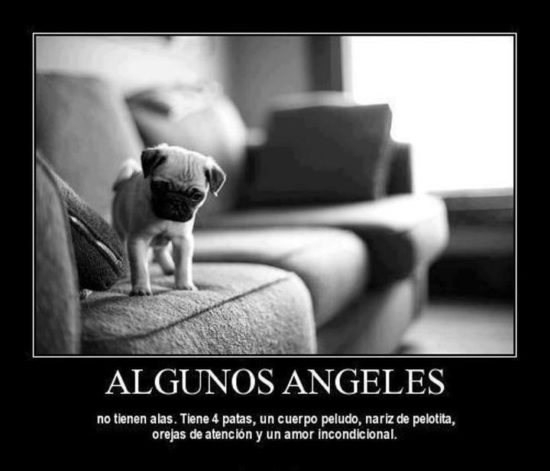 Animales con Frases  (3)