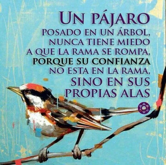 Animales con Frases  (4)
