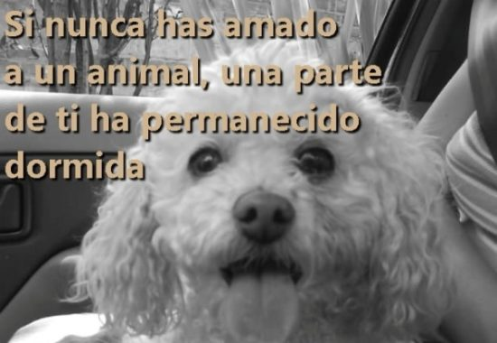 Animales con Frases  (5)