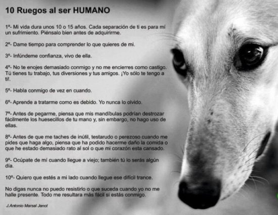 Animales con Frases  (6)