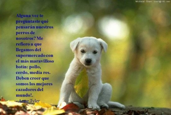 Animales con Frases  (8)