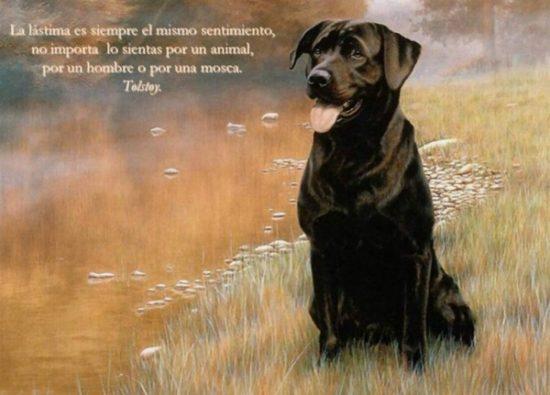 Animales con frases para Reflexionar  (14)