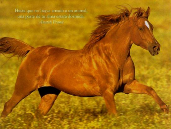 Animales con frases para Reflexionar  (8)