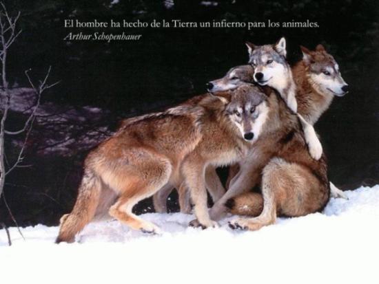 Animales con frases para Reflexionar  (9)