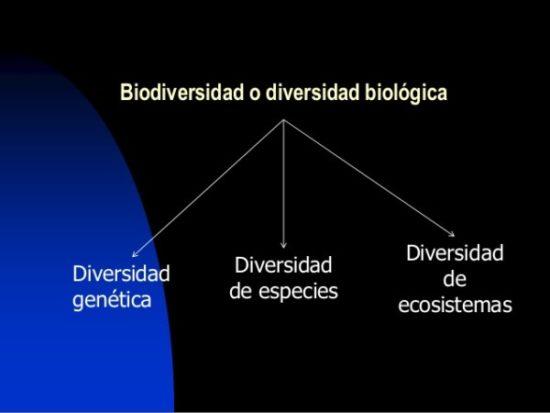 Día de la Biodiversidad  (14)