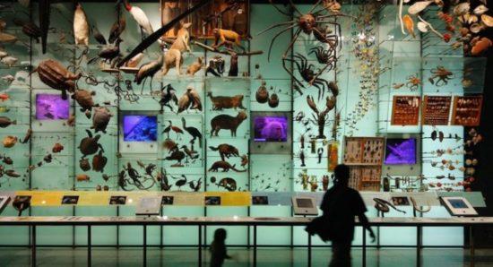Día de la Biodiversidad  (15)