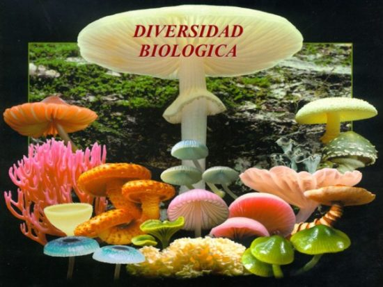 Día de la Biodiversidad  (16)