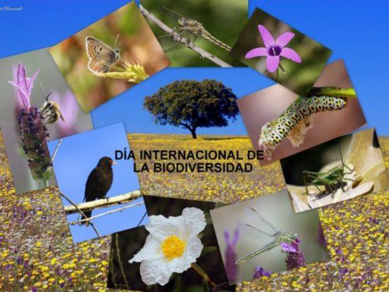Día de la Biodiversidad  (17)