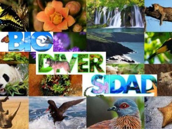 Día de la Biodiversidad  (18)