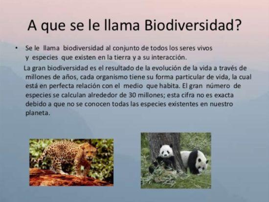 Día de la Biodiversidad  (19)