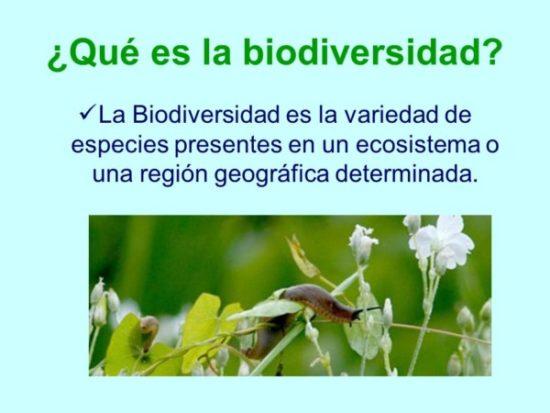 Día de la Biodiversidad  (20)