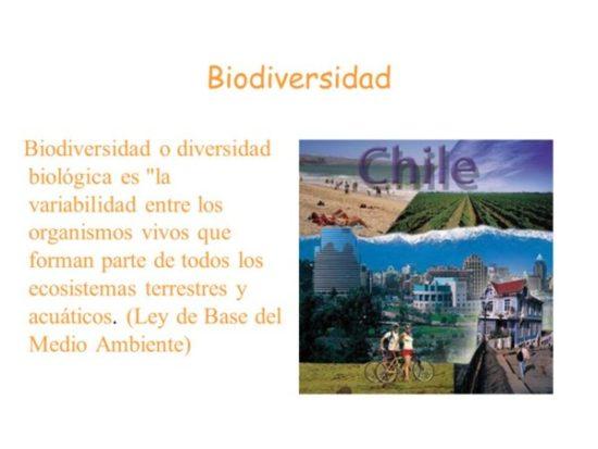 Día de la Biodiversidad  (21)