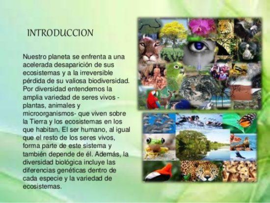 Día de la Biodiversidad  (26)