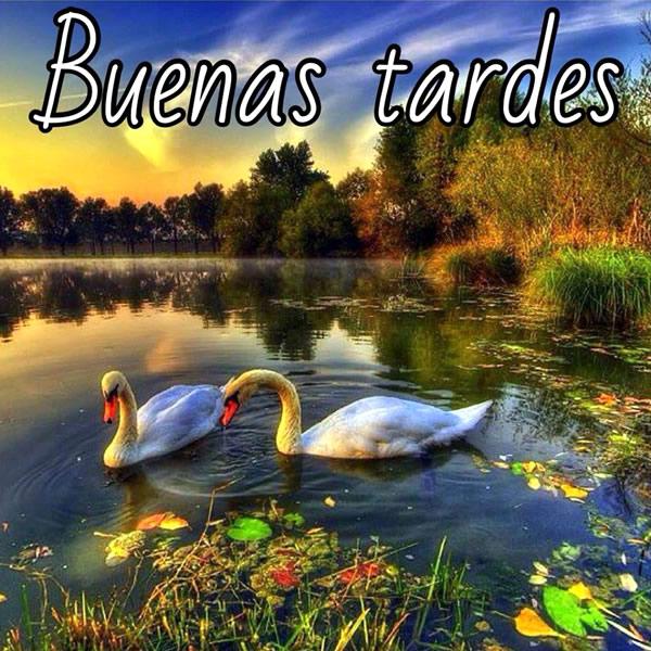 Imagenes-Buenas-Tardes_39