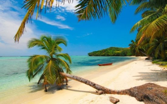 Playa sol y palmeras  (2)