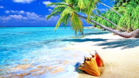 Playa sol y palmeras  (4)