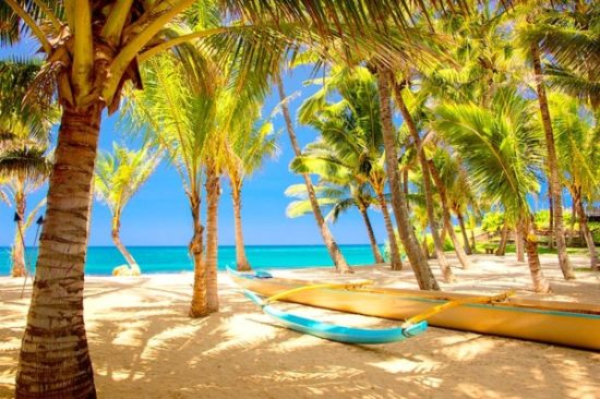 Playa sol y palmeras  (7)