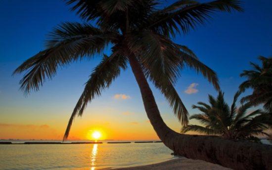 Playa sol y palmeras  (8)