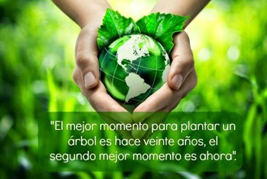 cuidar el medio ambiente - frases (9)