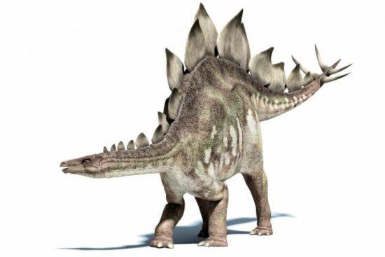 especies de Dinosaurios (21)