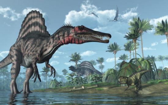 especies de Dinosaurios (23)