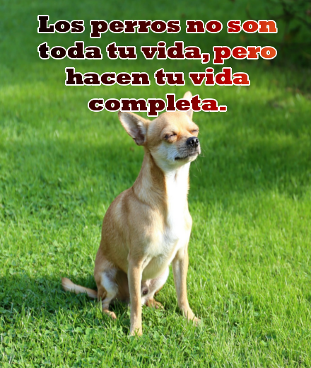 Imagenes-con-frases-bonitas-sobre-los-perros