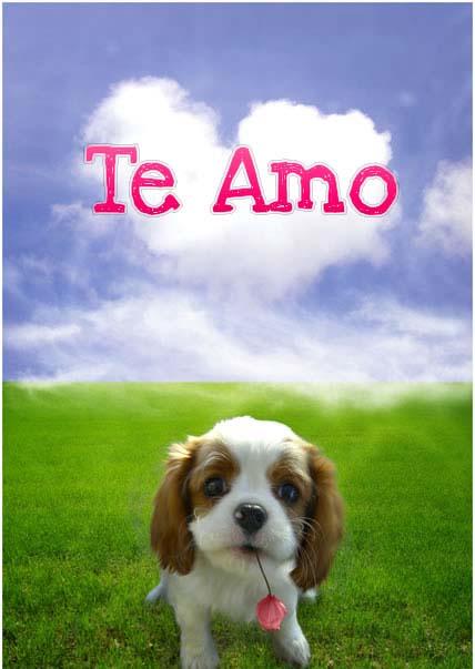 Imagenes-de-perros-con-frases-de-amor