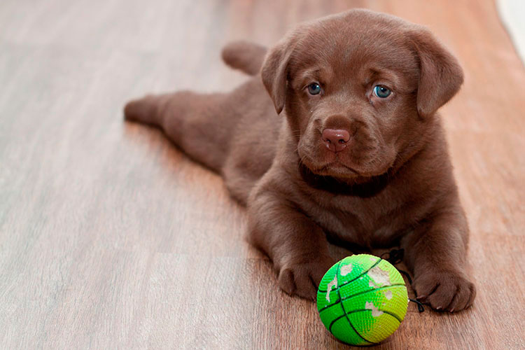 Nombres-de-perro-con-la-letra-L