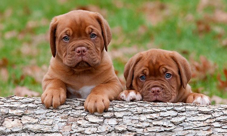 Nombres-de-perro-con-la-letra-N