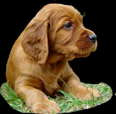 gifs-animados-perros-046330