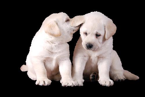 gifs-animados-perros-741471
