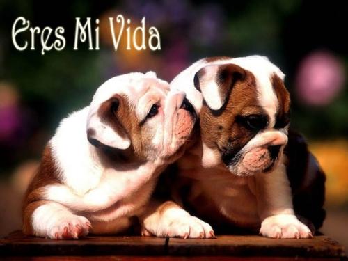 imagenes-bonitas-con-perros