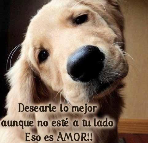 Frasesamor Frases Sobre Perros Amor