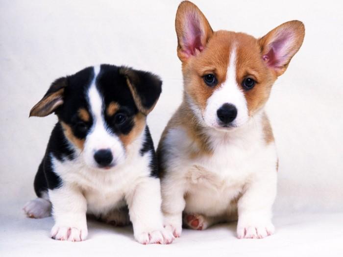 m-fotos-de-perros.html-0