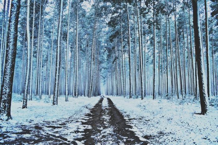 winter-912133_960_720