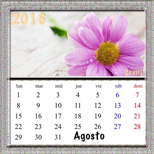 8-Agosto-Flores-2016-3