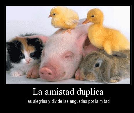 Imagenes De Amor Con Movimiento De Corazones Rosas Y Animales