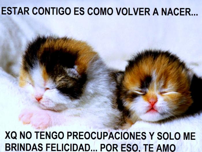 Best Imagenes Con Movimientos De Animales Tiernos Con Frases Image