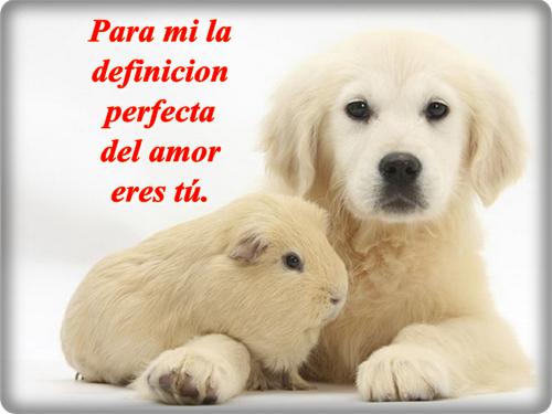 Best Imagenes Tiernas De Animales Animadas Con Frases De Amor Image