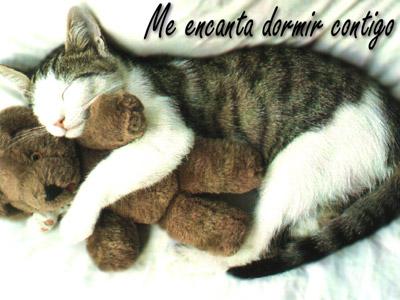 Animal Tarjetas De Amor Www Imagenesmi Com
