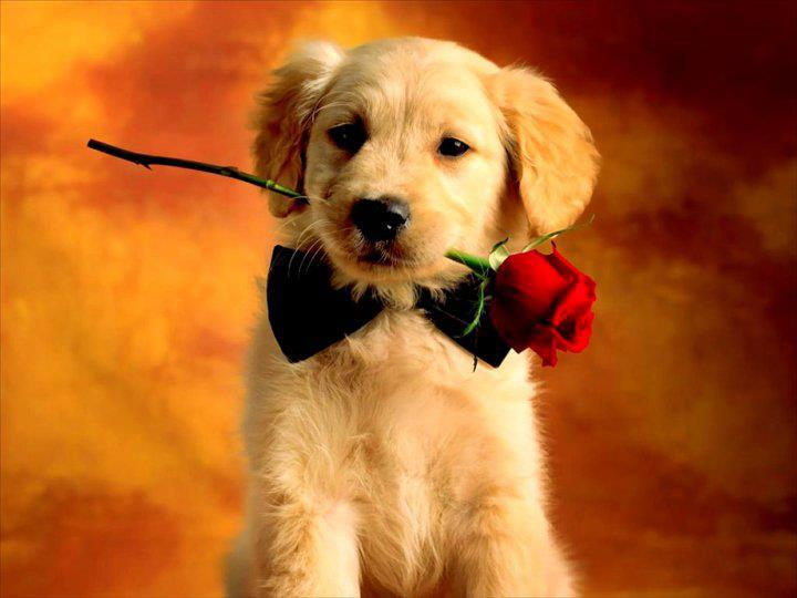 Imágenes De Amor Con Movimiento De Corazones Rosas Y Animales