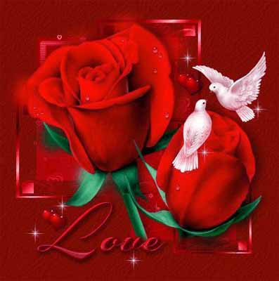 imagenes-rosas-de-amor-7