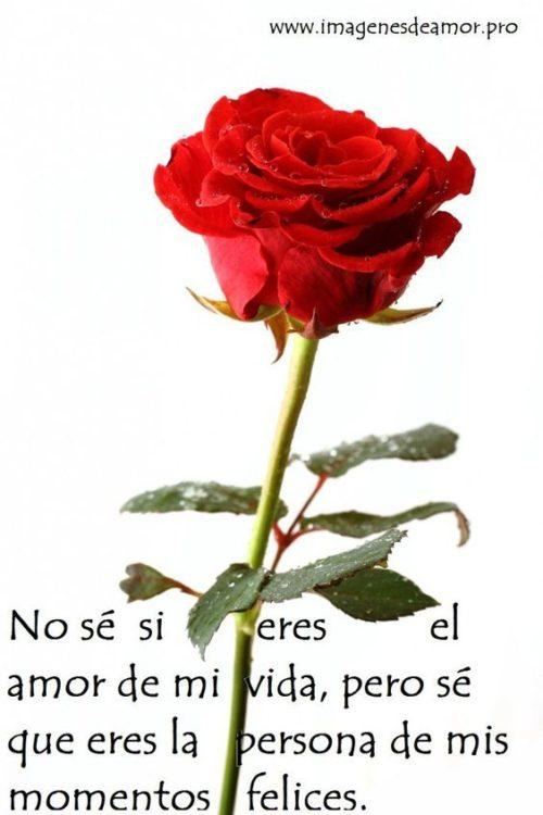 amor-31