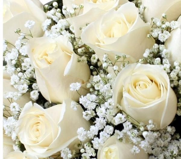 Imágenes de Rosas rojas, blancas, azules, negras, ramos y tatuajes ...