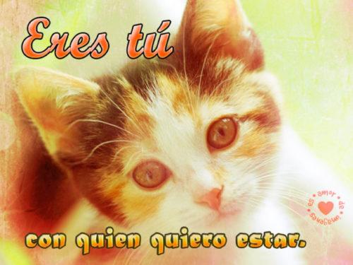 bello-gatito-con-frase-para-compartir-frases-de-amor-para-los-amantes-de-los-gatos