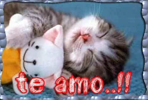 gatito-tierno-con-frase-de-amor